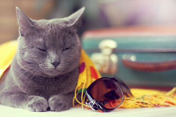 waiting for discounts on tickets/ cat with half-closed eyes is on duty on a table with luggage