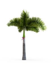 Wodyetia bifurcata isolated on white background. 3D Rendering, Illustration.