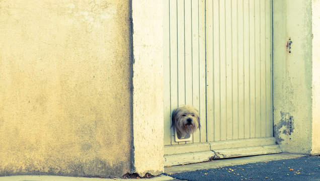 terrier dog pokes its head through small trapdoor in garage door.