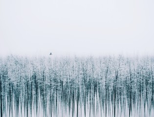 Silenc of nature. It is an artistic picture about winter.