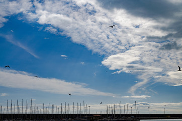 seagulls flying over the marina
