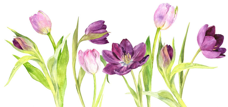 watercolor purple and pink tulips