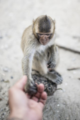 Portrait of a monkey in Thailand