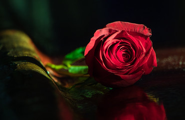 Single red rose resting on a polished wood bar against a dark background
