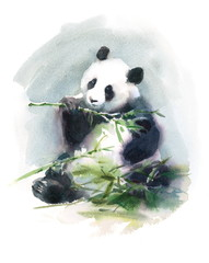 Watercolor Panda Eating Bamboo Animal Illustration Hand Drawn Wildlife