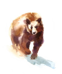Watercolor Brown Bear Walking - Hand Drawn Illustration of Wild Animal isolated on white background