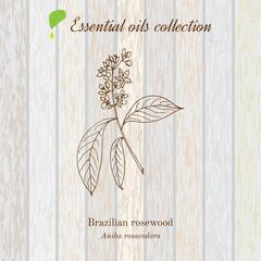 rosewood, essential oil label, aromatic plant.