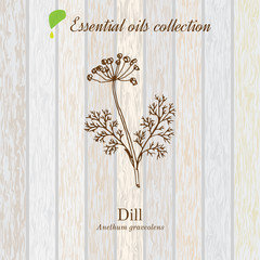 Dill, essential oil label, aromatic plant