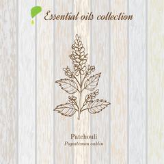 Patchouli, essential oil label, aromatic plant.