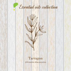 Tarragon, essential oil label, aromatic plant