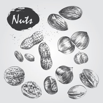 Hand drawn set of nuts isolated on white background. Walnut, hazelnut, Pistachios, almond, chestnut , peanut in sketch in style, vector illustrator.