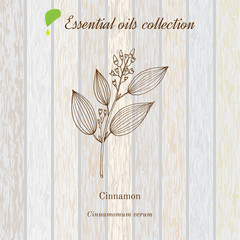 Cinnamon, essential oil label, aromatic plant