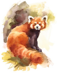 Watercolor Red Panda on the Branch Animal Illustration Hand Drawn Wildlife