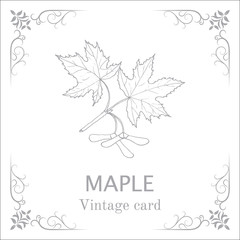 Maple branch with leaves and seeds. Vintage card