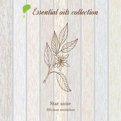 Star anise, essential oil label, aromatic plant