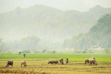 Mai Chau Scenery, Vietnam