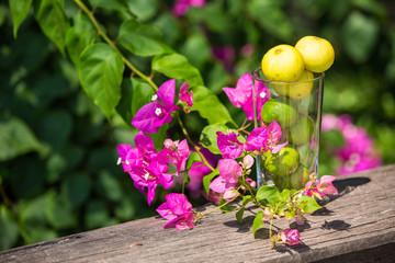 Lemons in glass with bougainvillea garden