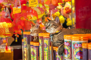 Two cats sitting outside a Hong Kong store