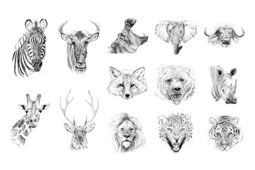 Portrait of animals drawn by hand in pencil
