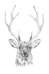 Portret jelenia rysowane ręcznie ołówkiem - 141200087