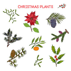 Collection of winter plants, Christmas design