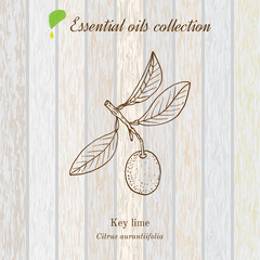Pure essential oil collection, lime. Wooden texture background