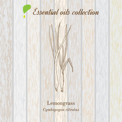 Pure essential oil collection, lemongrass. Wooden texture background