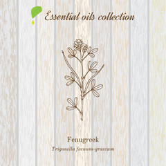 Pure essential oil collection, fenugreek. Wooden texture background