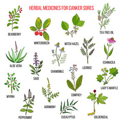 Best herbal remedies for canker sores