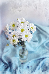 White flowers chrysanthemums on background of blue blanket