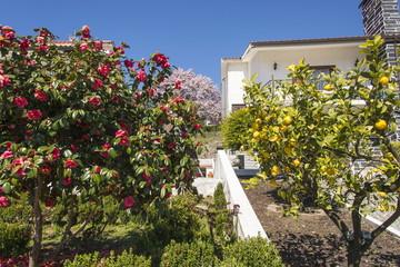 Blooming Spring in Portugal