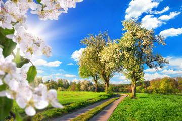Ein Paradies im Frühling, idyllische Landschaft mit Blüten, Bäumen, Wiese, blauem Himmel und Sonne