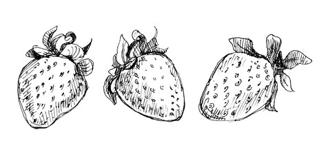 Graphic drawing pen and ink: strawberry, three berries. Isolated illustration of strawberries.