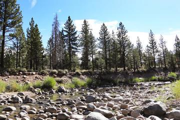 Wall Mural - Western Drought Shallow Stream Sierra Nevada Mountains