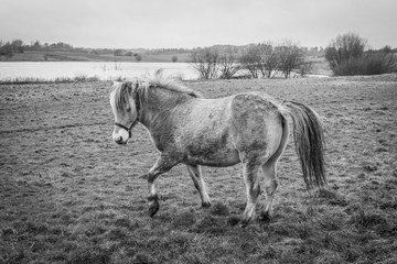 Horse on a field in rural surroundings