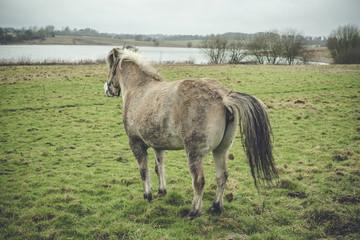 Horse taking a dump on a field