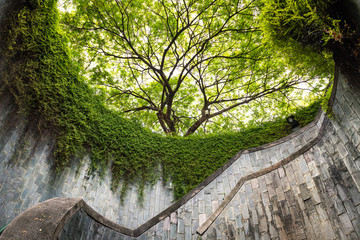 The tree over tunnel walkway at Fort Canning Park and Penang road., Singapore