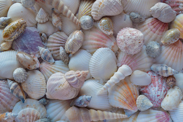 Various colorful seashells background. Dead sea coast.