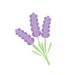 Bunch of lavender isolated on a white background. Vector illustration.
