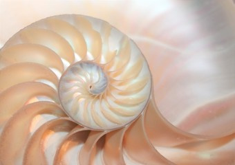 nautilus shell cross section spiral Fibonacci  symmetry growth swirl golden ratio pompilius copy space mollusk