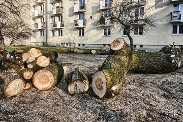 A pile of cut wood  in a city in Poland.