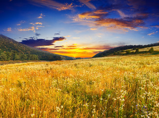 Wall Mural - morning meadow
