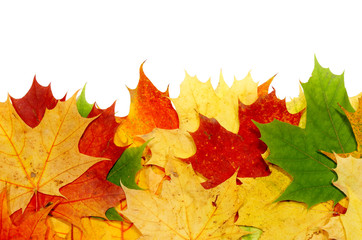 Wall Mural - maple leaf