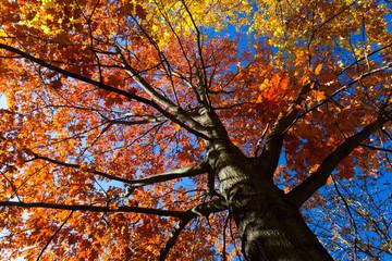 Wall Mural - autumn leaf