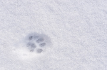 An animal footprint in the snow