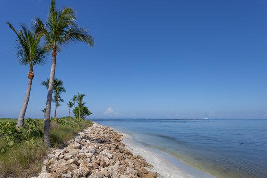 Palm Trees Along Captiva, Florida
