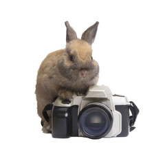 Rabbit and camera.