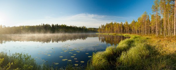 Foto op Canvas Meer / Vijver Serene morning at forest pond
