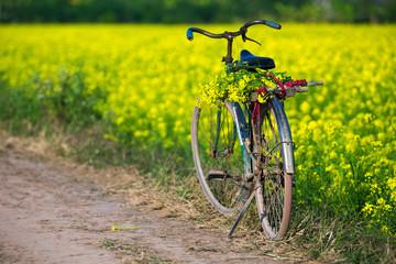 Bicycle in beautiful brassicaceae flower field in Vietnam.