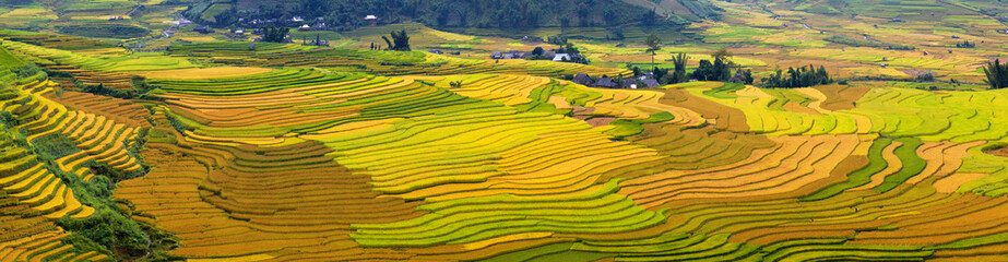 Foto auf Gartenposter Reisfelder Terraced rice fields in Vietnam